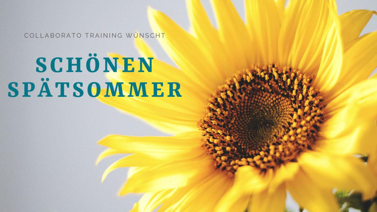 Headerbild: Collaborato Training wünscht einen schönen Spaetsommer mit Sonnenblume